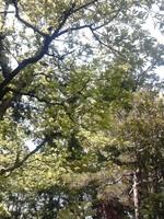 森林の中.jpg